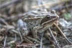 frosch-03-hdr-mantiuk06